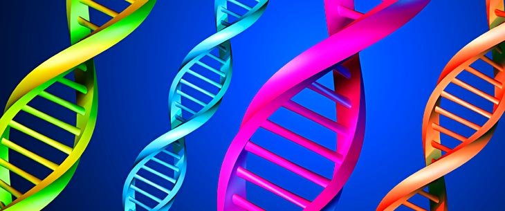 TDL Genetics